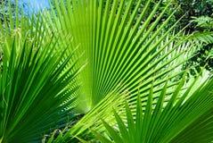 扇形棕榈大量居住于风景的 免版税图库摄影