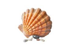 扇贝和海运小卵石的海扇壳 免版税库存图片