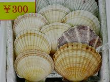 扇贝待售在海鲜市场上 库存照片