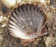 扇贝壳和沙子在水中 免版税库存图片
