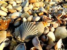 扇贝壳和pebbleson海滩 库存照片