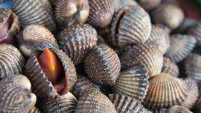 扇贝海鲜纤巧例如泰国的鸟蛤 免版税库存照片