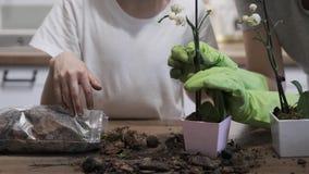 手一起种植在花盆的儿童女儿和母亲特写镜头兰花 股票视频