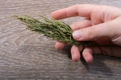 手中一片不同干燥的叶子 免版税图库摄影