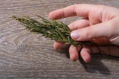 手中一片不同干燥的叶子 库存照片