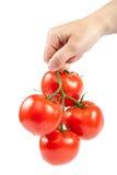 手中分支新鲜的蕃茄 免版税库存照片