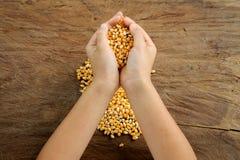 手中玉米的五谷 免版税库存图片