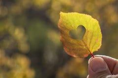 手中秋天黄色的叶子 免版税库存图片