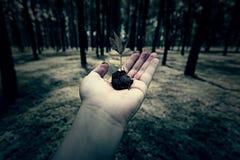 手举行一颗种子在森林地 图库摄影