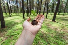 手举行一颗种子在森林地 库存图片