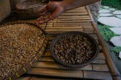 手举行Kopi Luwak,麝猫咖啡,有机未加工的咖啡豆 图库摄影