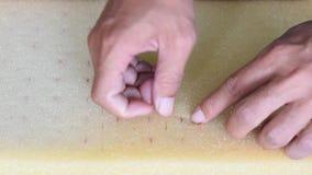 手人被拾起瓜一颗桃红色种子在种植投入了海绵幼木 股票视频
