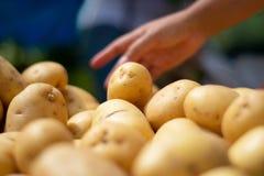手从市场堆的采摘土豆 免版税库存照片