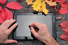 手写在片剂的,秋天,五颜六色的叶子 库存图片