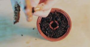 手加水烟筒的烟草在shisha的一个特别碗 影视素材