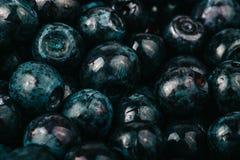 手动地收集的蓝莓 自然本底 浅dept 库存图片