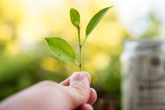 手和叶子绿色和分支成长  保重  库存照片