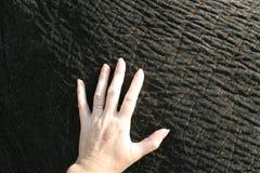 手和大象 免版税库存照片