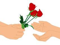 手和红色花在被隔绝的白色背景 免版税库存图片