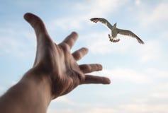 手和鸟在天空。 免版税库存图片