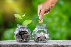 手在企业绿色自然本底金钱savi的上面投入了金钱瓶钞票钞票的树图象与生长的植物的 库存照片