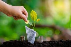 手在企业绿色自然本底金钱savi的上面投入了金钱瓶钞票钞票的树图象与生长的植物的 库存图片