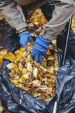 手在大袋子的被放置的下落的叶子 免版税库存图片