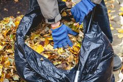 手在大袋子的被放置的下落的叶子 图库摄影