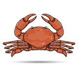手在白色背景隔绝的凹道螃蟹 免版税库存图片