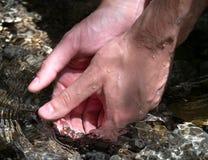 手在水中 免版税库存照片