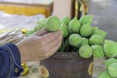 手在Budfhism采摘了在花瓶的绿色莲花崇拜的 图库摄影