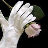 手套淡紫色玫瑰平方白色 免版税库存图片