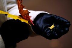 手套的一个女孩在秋天森林里拿着叶子 库存图片
