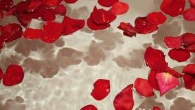 手女孩拿着与红色玫瑰花瓣的水 股票视频
