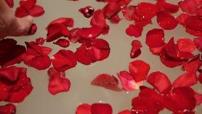 手女孩拿着与红色玫瑰花瓣的水 影视素材