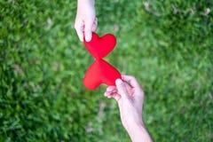手妇女送红心,并且手人送交换心脏的红心,双重心脏,草背景 图库摄影