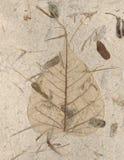手工制造叶子概要 库存照片