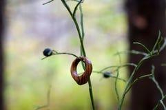 手工制造木圆环的珠宝 图库摄影