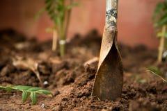 手工开掘的一种设备种植树的孔 免版税库存照片