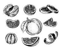 手拉传染媒介的桔子 向量例证
