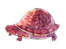 手拉的乌龟 免版税库存照片