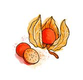 手拉的五颜六色的明亮的空泡,莓果 水彩,白色 库存图片