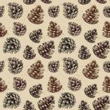 手拉的传染媒介例证 与杉木锥体的无缝的样式 库存图片