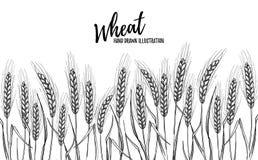 手拉的传染媒介例证-麦子 面包设计模板 P 图库摄影