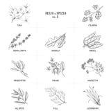 手拉的传染媒介套草本和香料葡萄酒 图库摄影