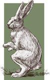 手拉的兔子 免版税图库摄影