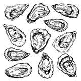 手拉的剪影牡蛎集合 新鲜的海鲜的剪影例证 库存照片