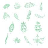 手拉的叶子元素 免版税图库摄影