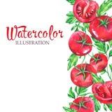 手拉的垂直的横幅用水彩红色蕃茄和叶子在白色背景 库存照片