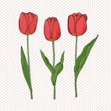 手拉的套侧视图红色郁金香花,剪影样式在被加点的背景隔绝的传染媒介例证 tuli手图画  库存图片